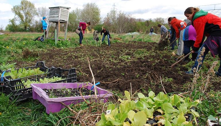 Ernährungssouveränität & Solidarische Landwirtschaft